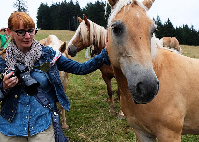 haubers-pferde2